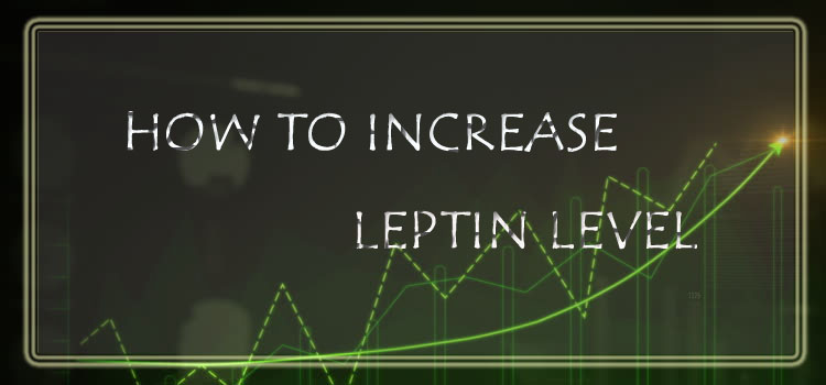 Increase Leptin Solution